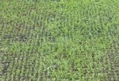 grass-mats-1